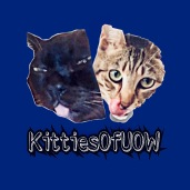 Follow us on Instagram @KittiesofUow